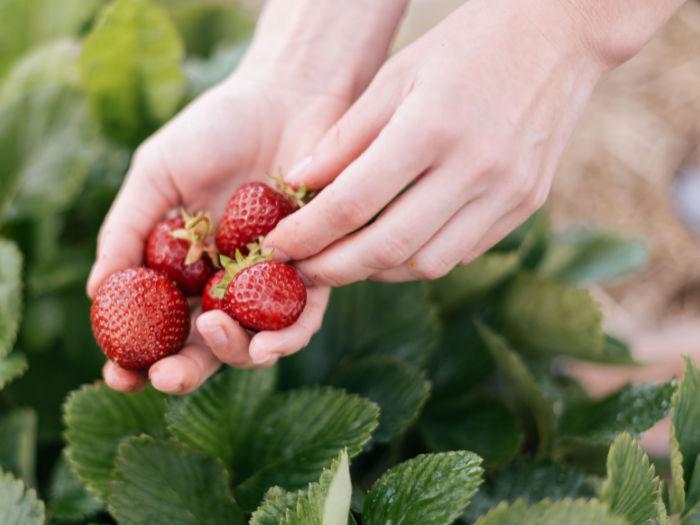hand and strawberries