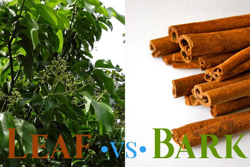 cinnamon leaves and cinnamon sticks