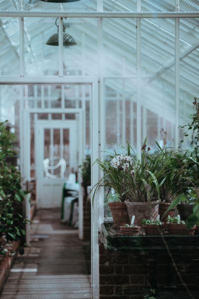 inside of a greenhouse 5 dog farm