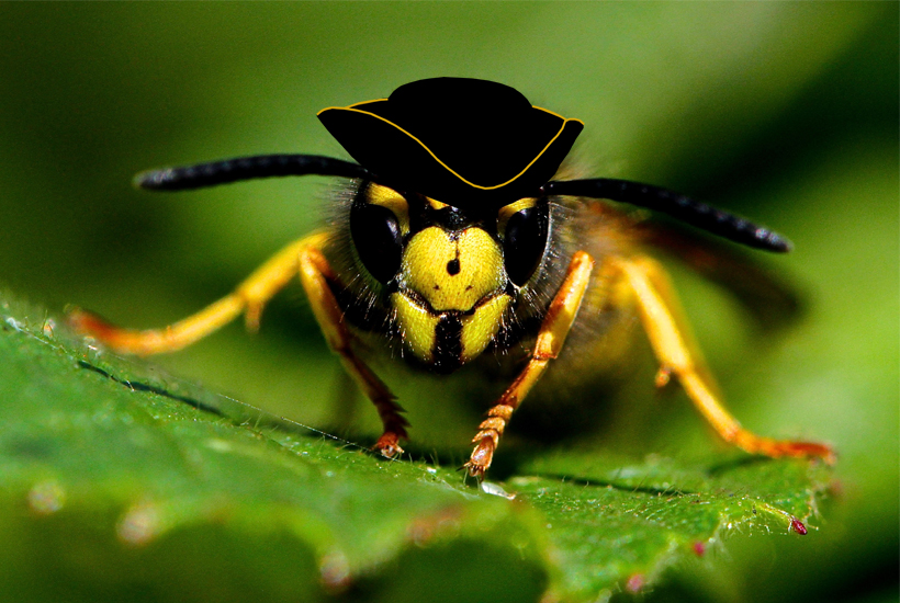bee with tri corner hat