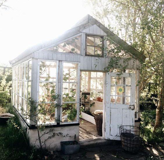 shabby chic greenhouse 5 dog farm