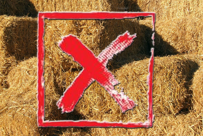 X thru bunches of hay 5 Dog Farm