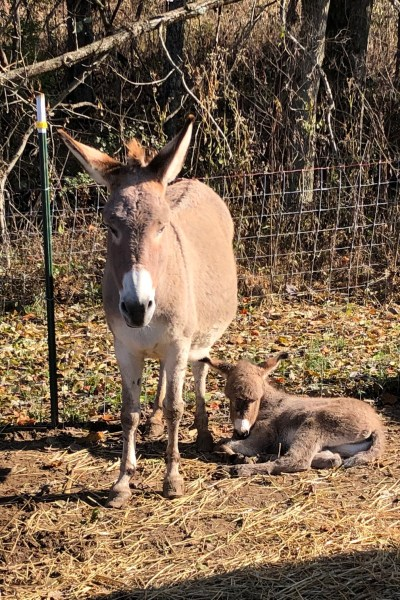 mom and baby donkey 5DogFarm