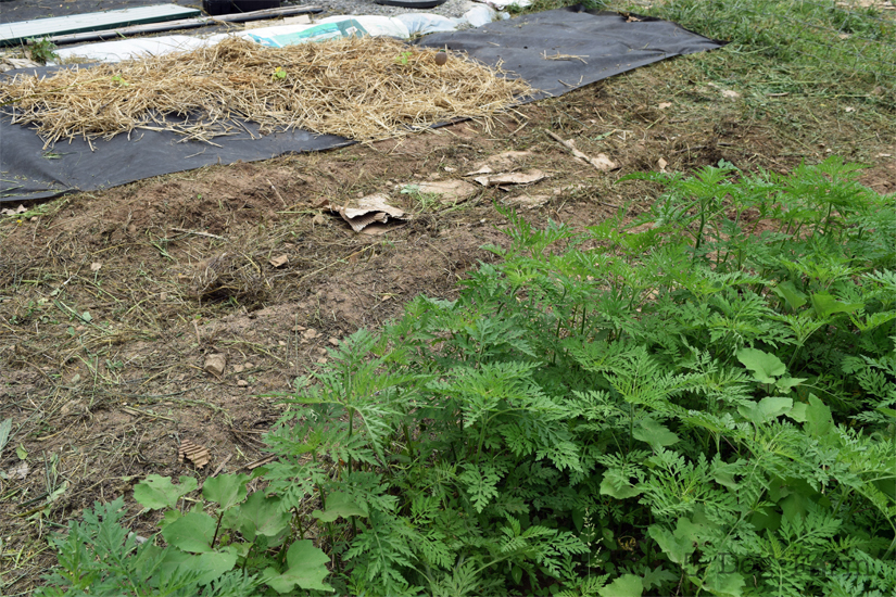 cleared garden row