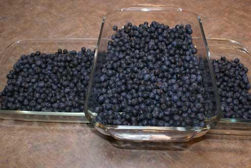 blueberry-sale-21