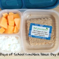 31 Days of School Lunchbox Ideas: Day 6 | 5DollarDinners.com