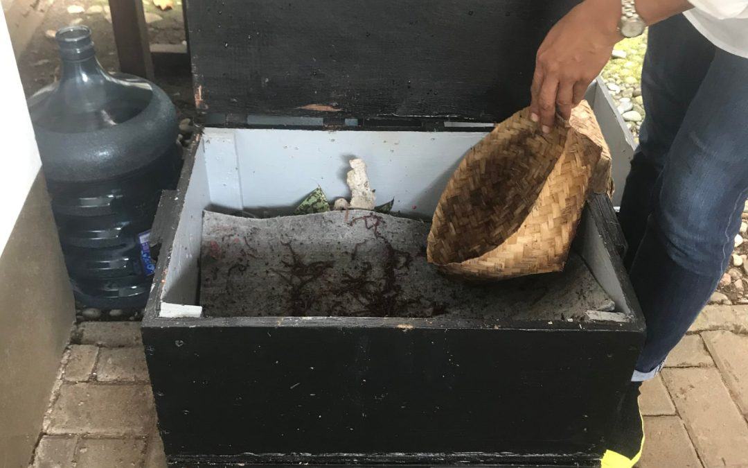 Make a home worm-farm to compost the kitchen waste and make better gardens