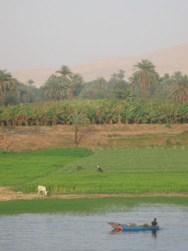 Nile river view