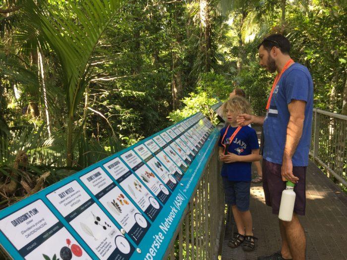 rainforest learning