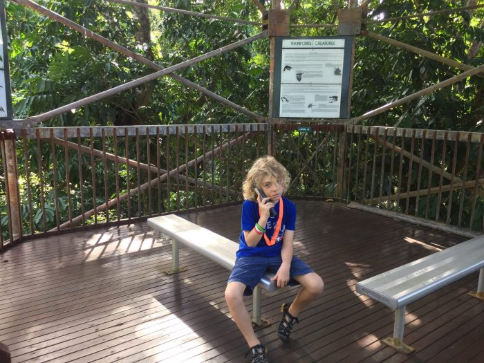 audio guides Daintree