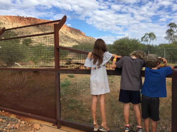 dingoes Desert Park
