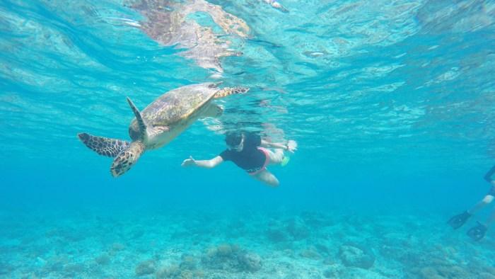 turtles Gili islands