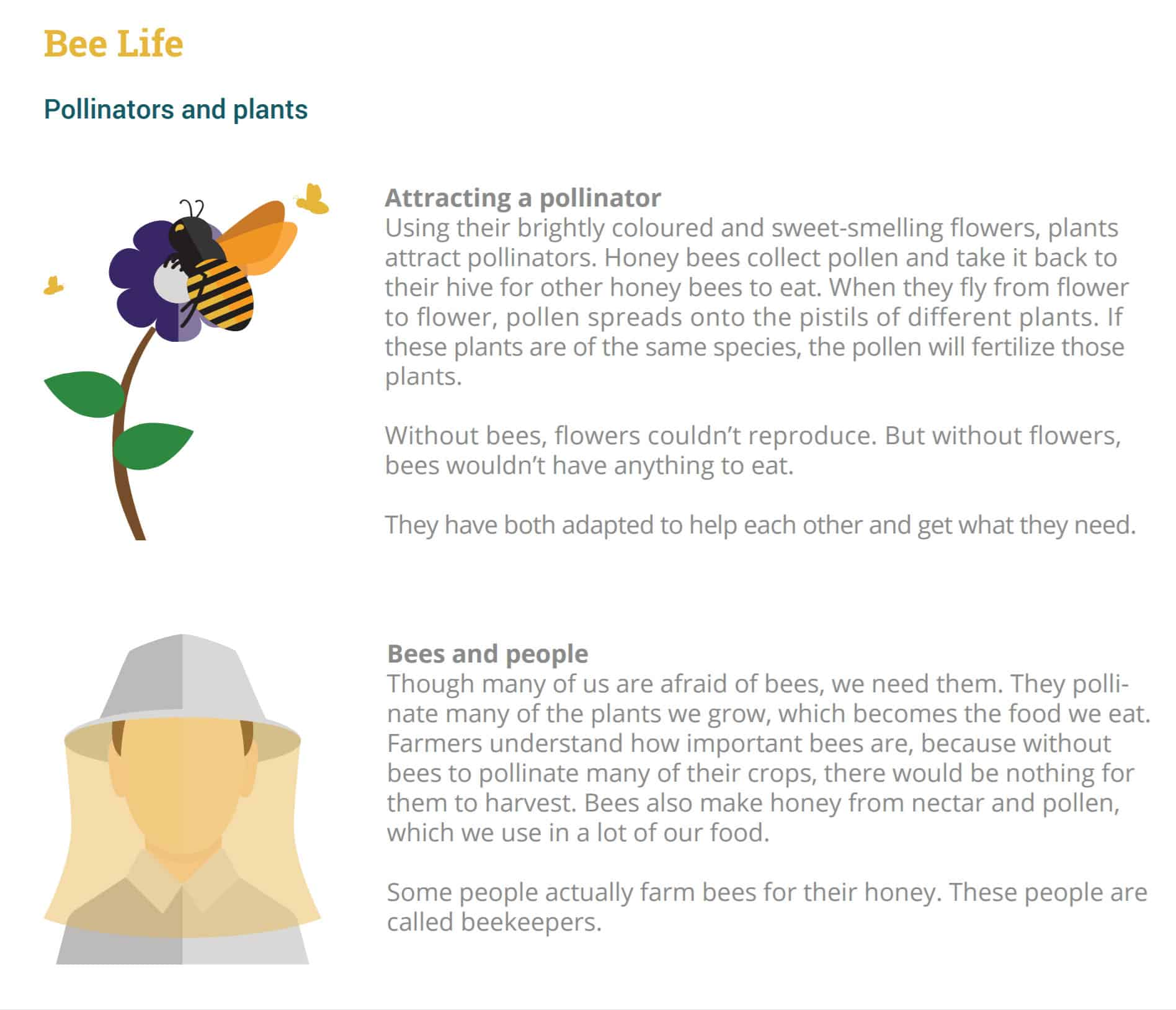Free Educational Toolkits To Learn More About Honey Bees