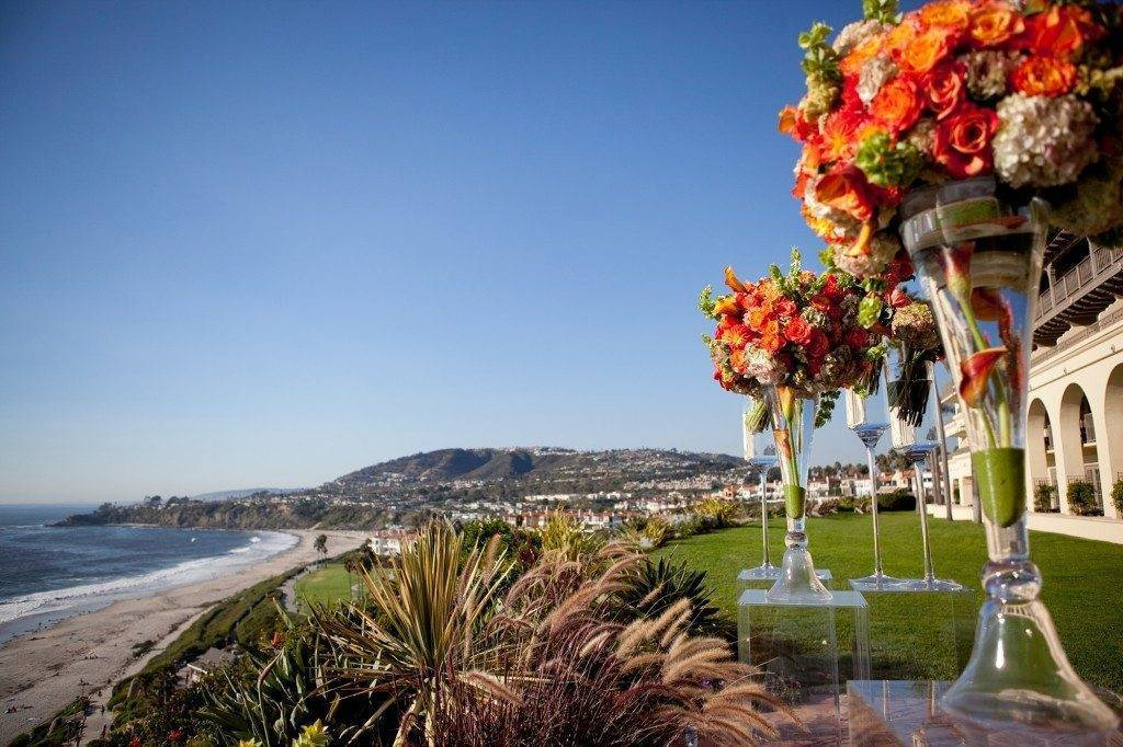 Not a cloud in the sky! A gorgeous blue sky and vibrant orange blooms make a perfect Californian palette. Photo: Christine Bentley Photography