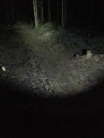 Kuva 6 - Vajaa teho -moodi riittää hyvin maastossa kulkemiseen kun valokeila on säädetty laajalle.
