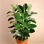 Clean Your Air….With Plants