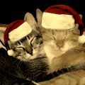 The Night Before Christmas….With Cats in the House