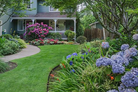 hydrangea shrub plant alpharetta home