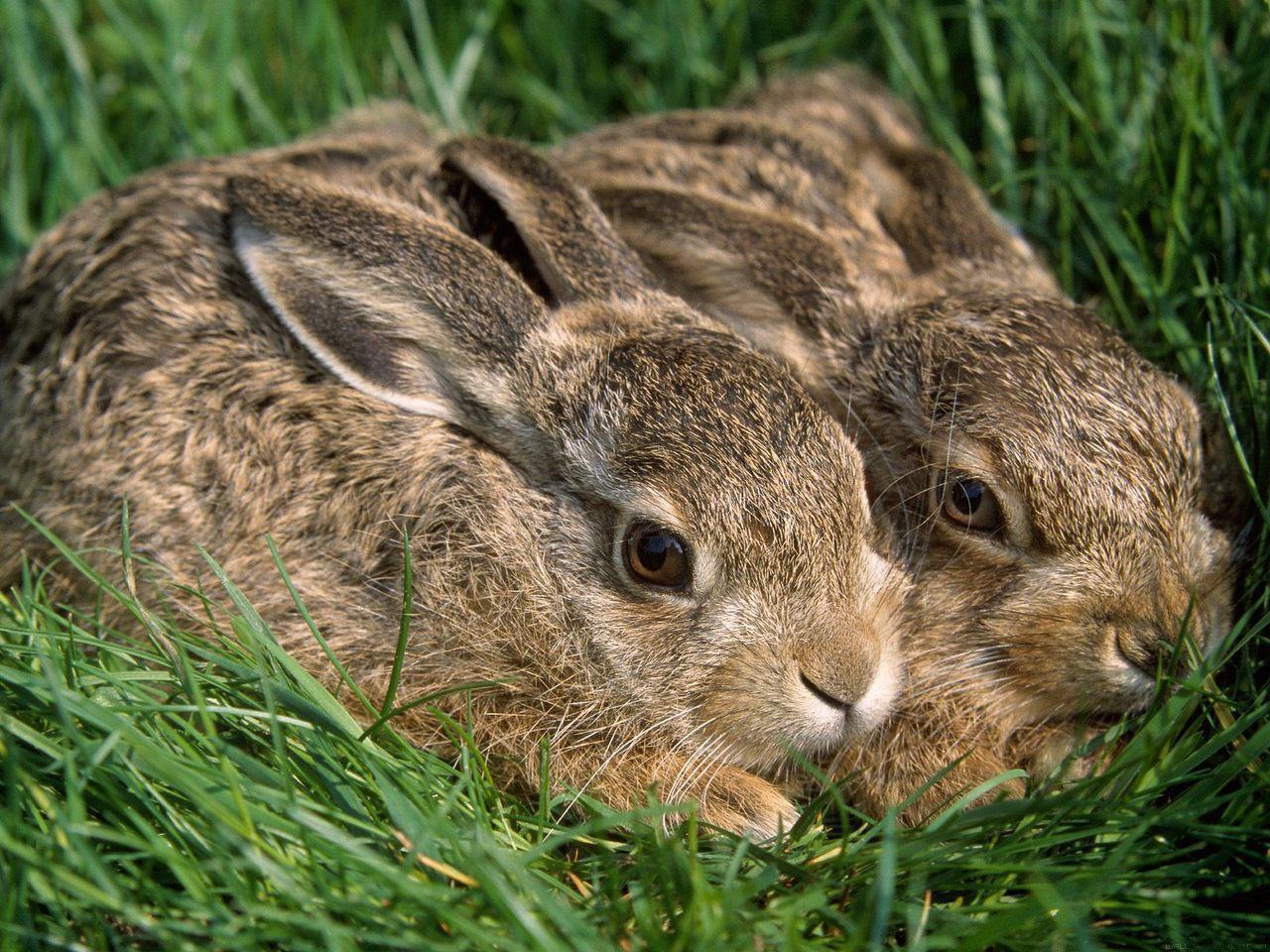 Animals In Grassland