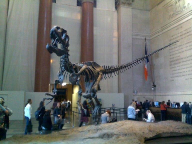 Museu de Historia Natural, Nova York