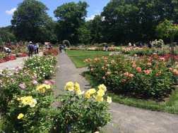 Rose Garden at Bronx Botanic Garden.
