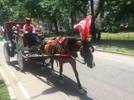 As polemicas carruagens do Central Park, NYC.