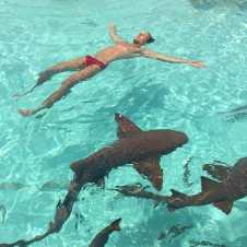 Nadando com tubarões nas Bahamas.