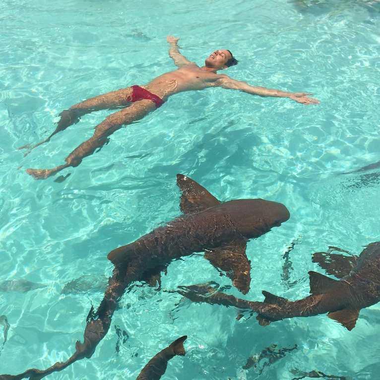 Resultado de imagem para West End, Ilha Grande Bahama  tubaroes