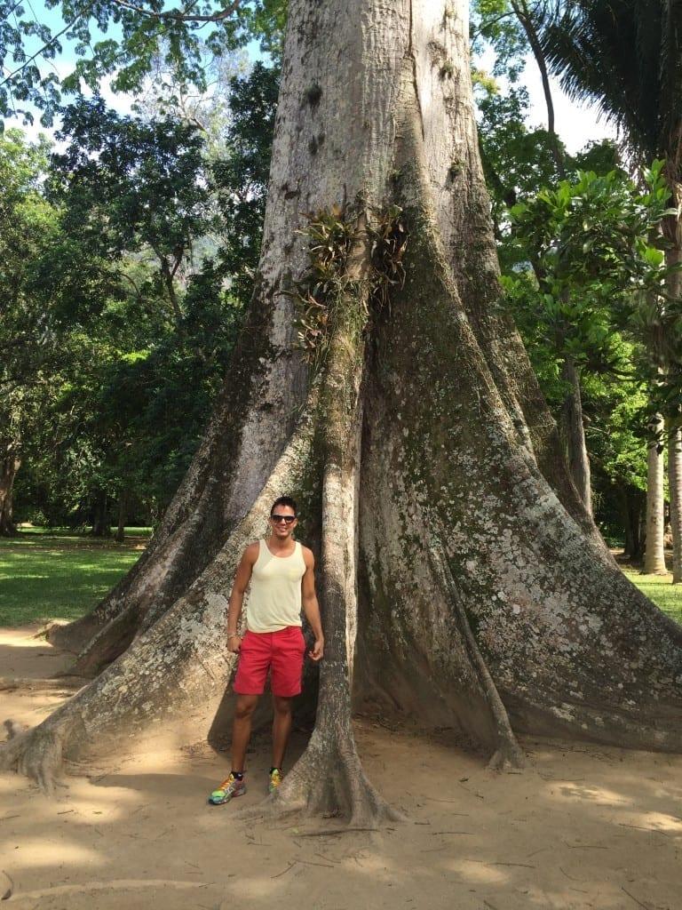 Huge samuma at Rio Botanical Garden, Rio de Janeiro.
