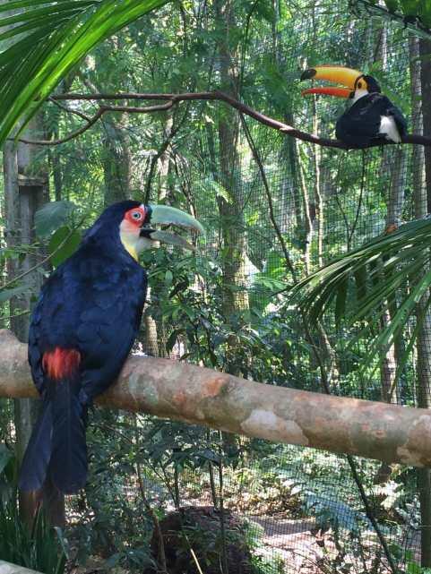 Toucans at Bird's Park.