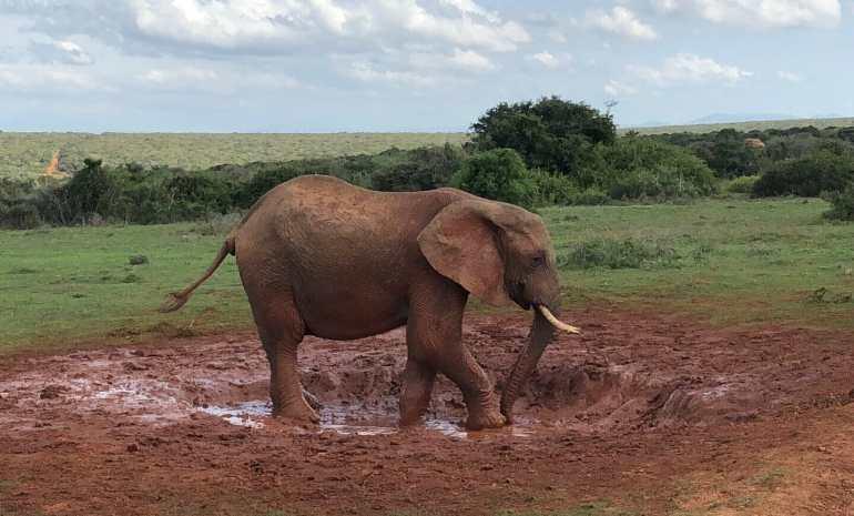 Safari no Parque Nacional Addo Elephant, África do Sul.