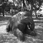 Remembering the elephant at Banks Zoo