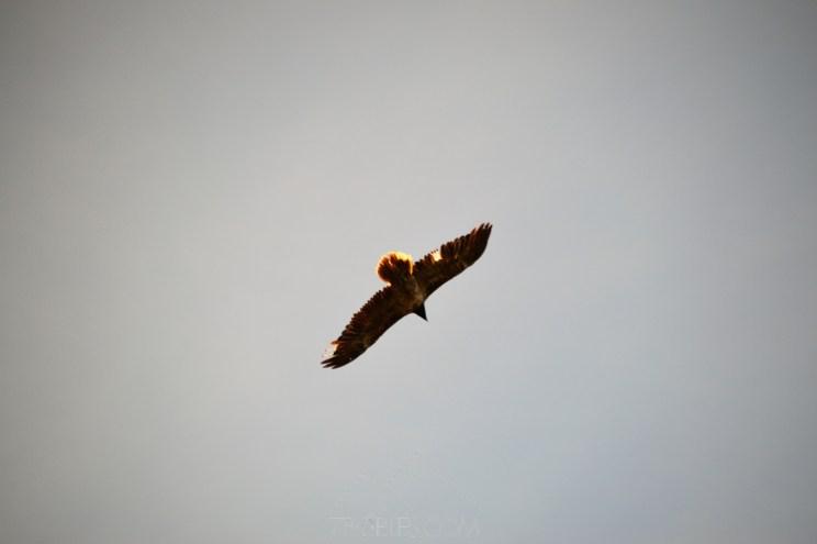 birdwatching tinença