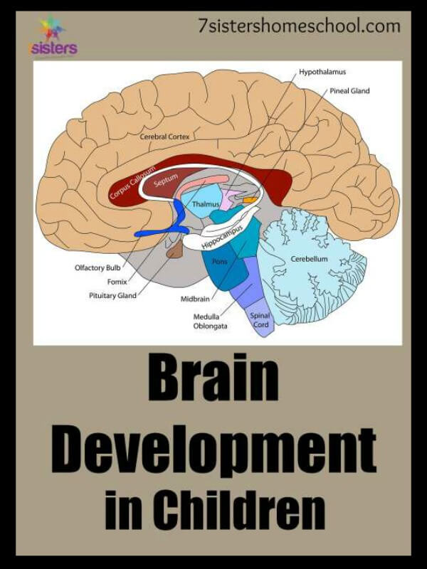brain development in children