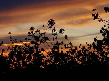 Sunsets and Flowers