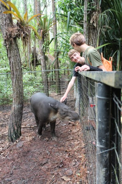 The author's sons pet a tapir