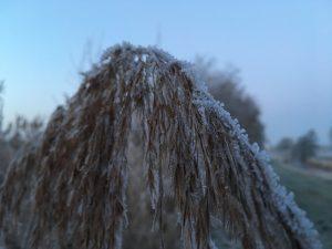 Eis auf Gras - morgendlicher langer Lauf