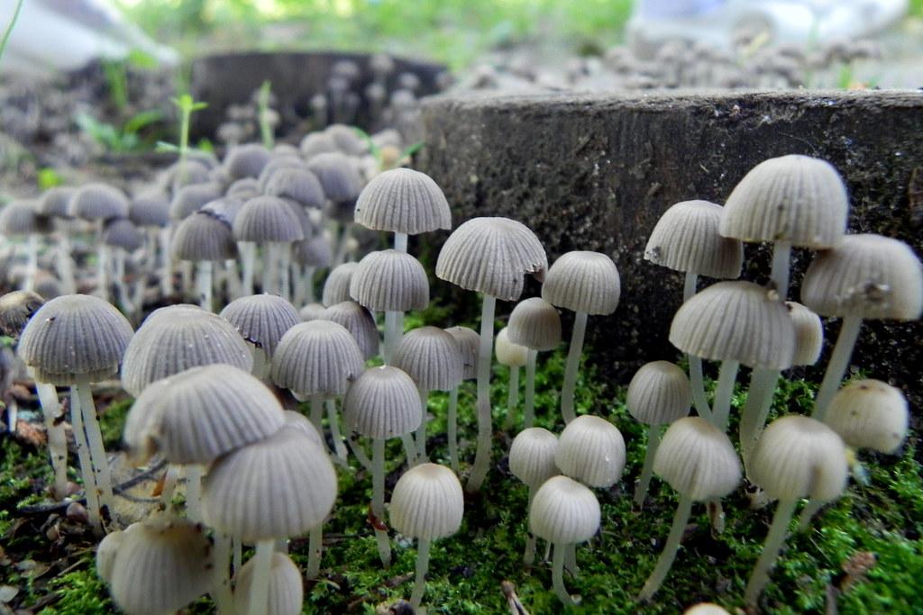 Denver First to Decriminalize Psychedelic Mushrooms