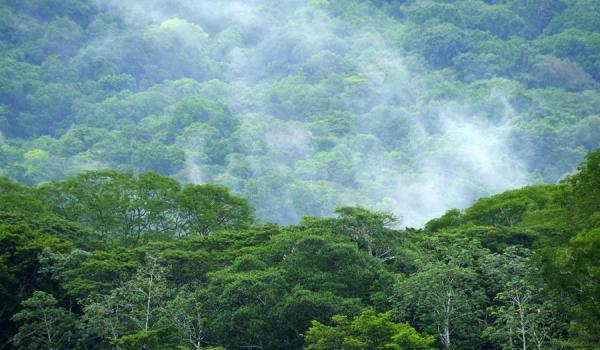 En riesgo más de 6 mil familias que mantienen contratos para protección de bosques, según FONAFIFO