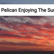 Pelican Enjoying The Sunset Jigsaw Puzzle Game
