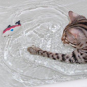 Как приучить кошку купаться