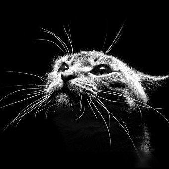 Кошка орет по ночам
