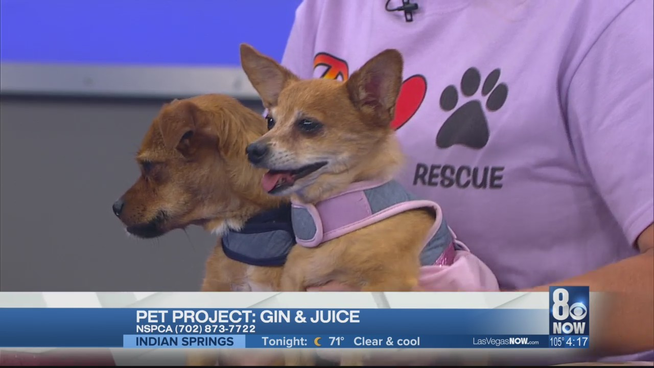 Gin & Juice are bonded dogs looking for homes