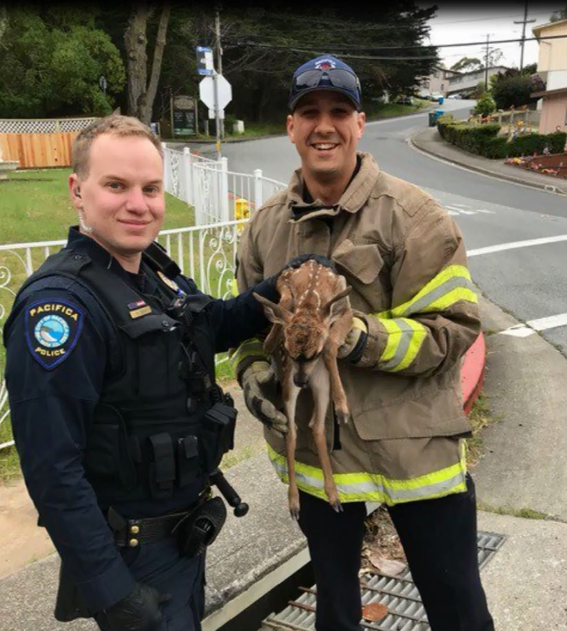 fawn_rescued_by_firefighters_1557438878149.JPG