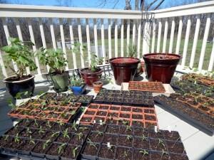 2016 seedlings