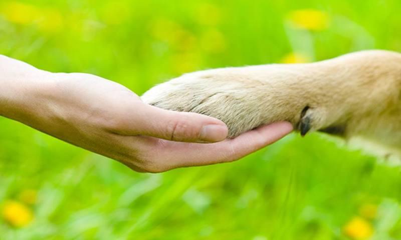 Paternò, un corteo per condannare la barbarie sui cani