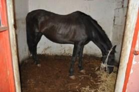foto 2 cavallo