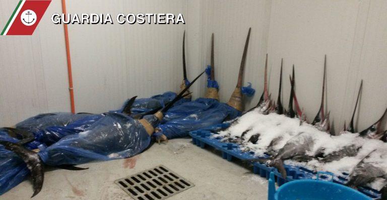CATANIA: Controlli al Mercato, sequestrati dalla Capitaneria due tonnellate di pesce spada