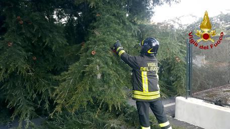 Tromba d'aria sul catanese: alberi e cartelloni divelti in città e provincia
