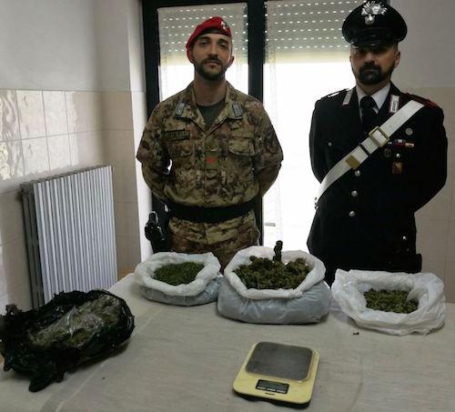MANIACE: Sequestrati 1,6 chili di marijuana e arrestato presunto pusher